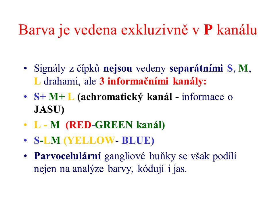 Barva je vedena exkluzivně v P kanálu Signály z čípků nejsou vedeny separátními S, M, L drahami, ale 3 informačními kanály: S+ M+ L (achromatický kaná