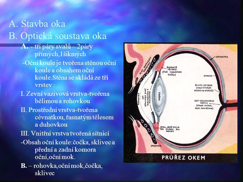 A. Stavba oka B. Optická soustava oka A. - tři páry svalů – 2páry přímých,1šikmých -Oční koule je tvořena stěnou oční koule a obsahem oční koule.Stěna