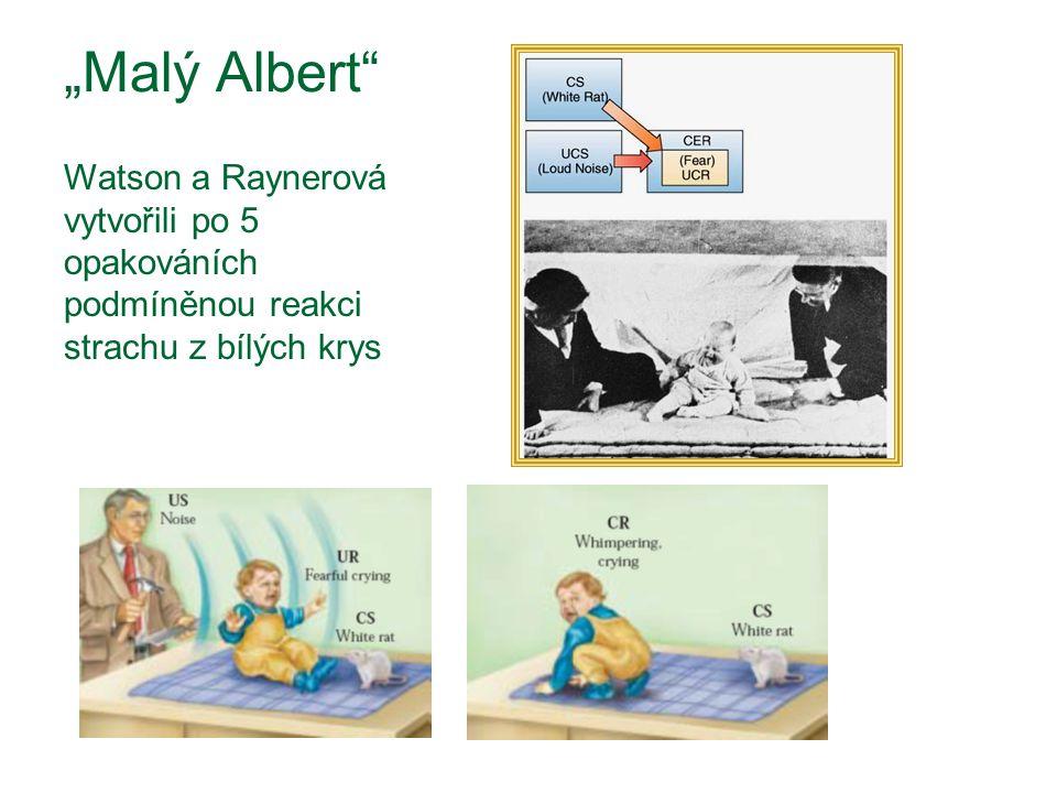 """""""Malý Albert"""" Watson a Raynerová vytvořili po 5 opakováních podmíněnou reakci strachu z bílých krys"""