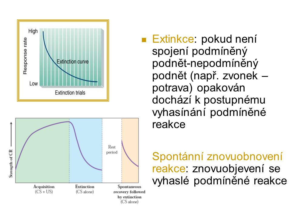 Extinkce: pokud není spojení podmíněný podnět-nepodmíněný podnět (např. zvonek – potrava) opakován dochází k postupnému vyhasínání podmíněné reakce Sp