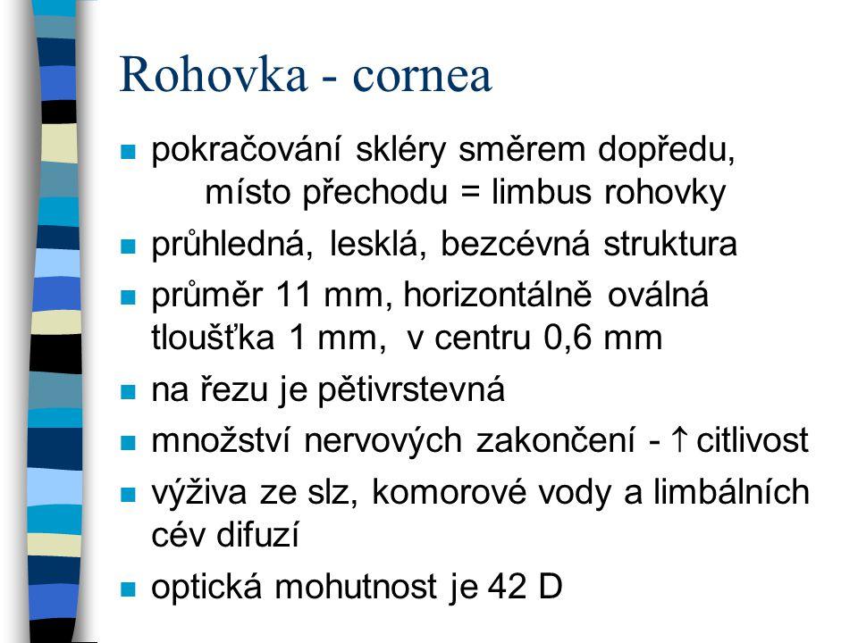 Rohovka - cornea n pokračování skléry směrem dopředu, místo přechodu = limbus rohovky n průhledná, lesklá, bezcévná struktura n průměr 11 mm, horizont