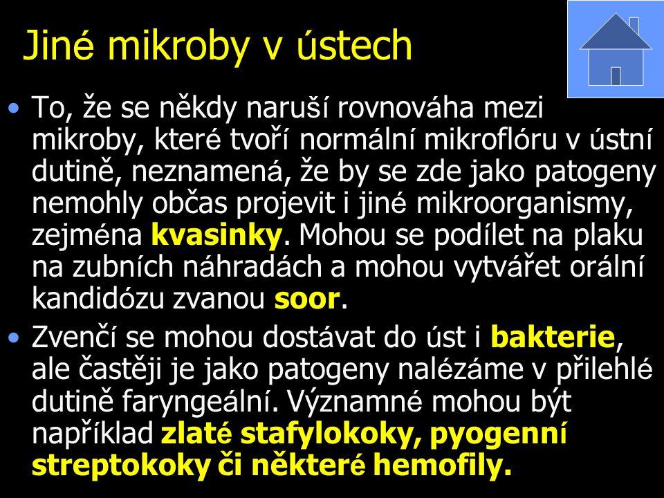 Jin é mikroby v ú stech To, že se někdy naru ší rovnov á ha mezi mikroby, kter é tvoř í norm á ln í mikrofl ó ru v ú stn í dutině, neznamen á, že by s