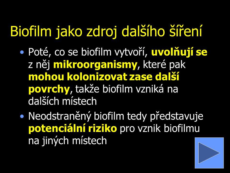 Biofilm jako zdroj dalšího šíření Poté, co se biofilm vytvoří, uvolňují se z něj mikroorganismy, které pak mohou kolonizovat zase další povrchy, takže