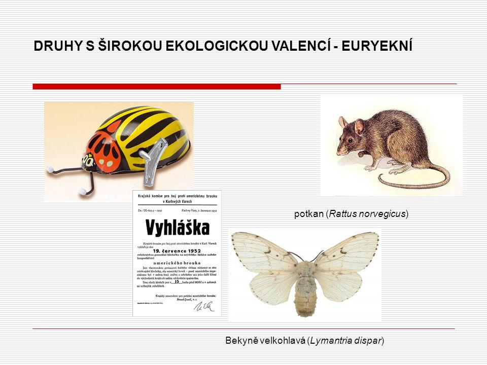 DRUHY S ŠIROKOU EKOLOGICKOU VALENCÍ - EURYEKNÍ potkan (Rattus norvegicus) Bekyně velkohlavá (Lymantria dispar)