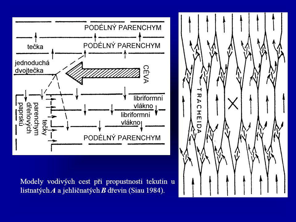 Modely vodivých cest při propustnosti tekutin u listnatých A a jehličnatých B dřevin (Siau 1984).