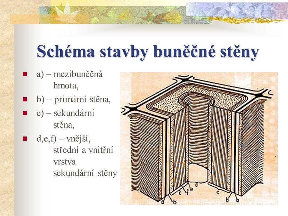 Schéma stavby buněčné stěny a) – mezibuněčná hmota, b) – primární stěna, c) – sekundární stěna, d,e,f) – vnější, střední a vnitřní vrstva sekundární stěny