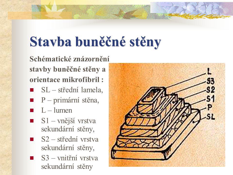Stavba buněčné stěny Schématické znázornění stavby buněčné stěny a orientace mikrofibril : SL – střední lamela, P – primární stěna, L – lumen S1 – vnější vrstva sekundární stěny, S2 – střední vrstva sekundární stěny, S3 – vnitřní vrstva sekundární stěny