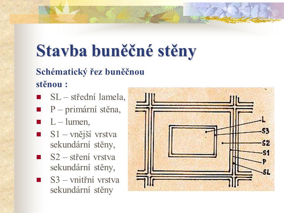 Stavba buněčné stěny Schématický řez buněčnou stěnou : SL – střední lamela, P – primární stěna, L – lumen, S1 – vnější vrstva sekundární stěny, S2 – stření vrstva sekundární stěny, S3 – vnitřní vrstva sekundární stěny
