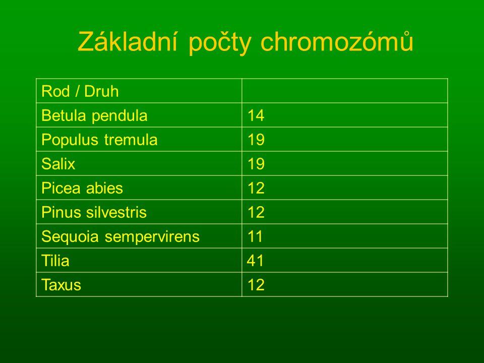 Základní počty chromozómů Rod / Druh Betula pendula14 Populus tremula19 Salix19 Picea abies12 Pinus silvestris12 Sequoia sempervirens11 Tilia41 Taxus12