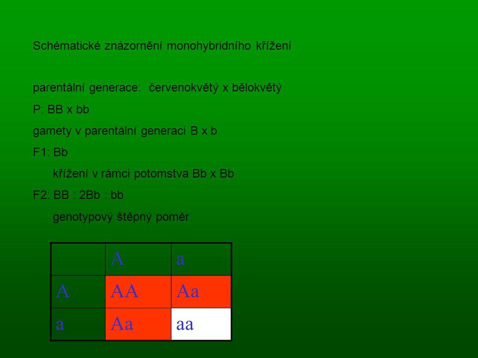 Schématické znázornění monohybridního křížení parentální generace: červenokvětý x bělokvětý P: BB x bb gamety v parentální generaci B x b F1: Bb křížení v rámci potomstva Bb x Bb F2: BB : 2Bb : bb genotypový štěpný poměr Aa AAAAa a aa