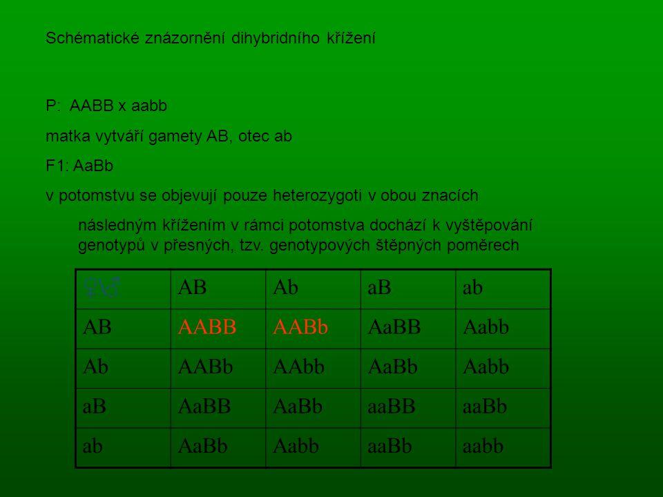 ♀\♂ABAbaBab ABAABBAABbAaBBAabb AbAABbAAbbAaBbAabb aBAaBBAaBbaaBBaaBb abAaBbAabbaaBbaabb P: AABB x aabb matka vytváří gamety AB, otec ab F1: AaBb v potomstvu se objevují pouze heterozygoti v obou znacích následným křížením v rámci potomstva dochází k vyštěpování genotypů v přesných, tzv.