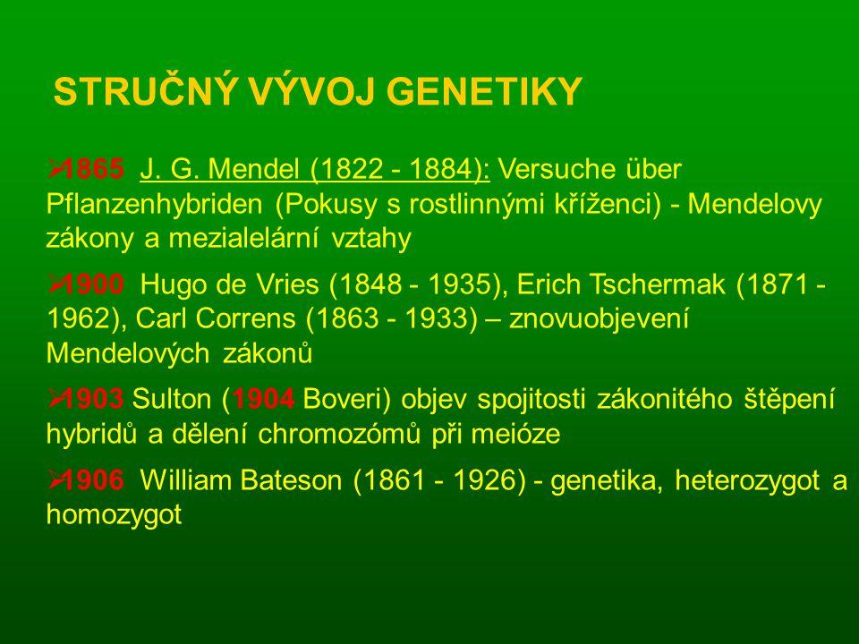 STRUČNÝ VÝVOJ GENETIKY  1865 J.G.