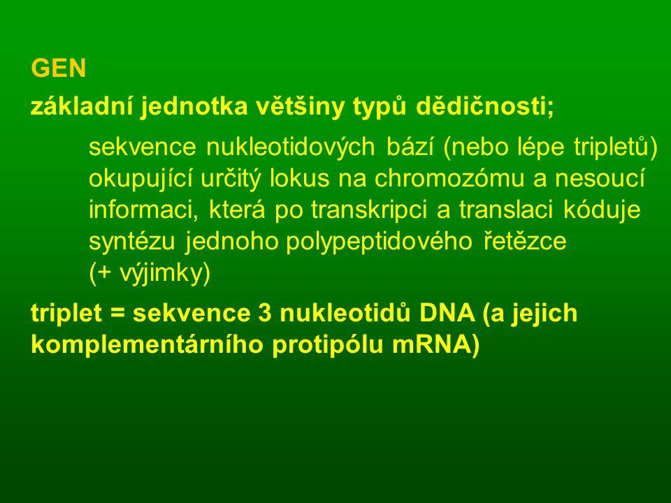 GEN základní jednotka většiny typů dědičnosti; sekvence nukleotidových bází (nebo lépe tripletů) okupující určitý lokus na chromozómu a nesoucí informaci, která po transkripci a translaci kóduje syntézu jednoho polypeptidového řetězce (+ výjimky) triplet = sekvence 3 nukleotidů DNA (a jejich komplementárního protipólu mRNA)