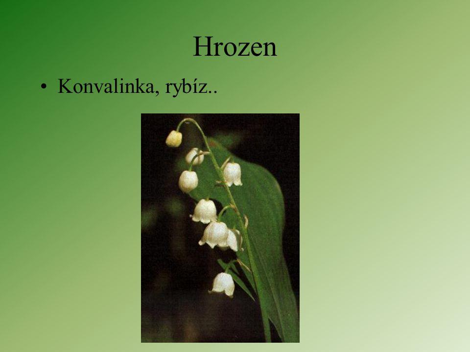 Květenství jednoduchá hroznovitá Postranní vřetena nepřerůstají hlavní Rozkvétají zdola nahoru (od obvodu ke středu)
