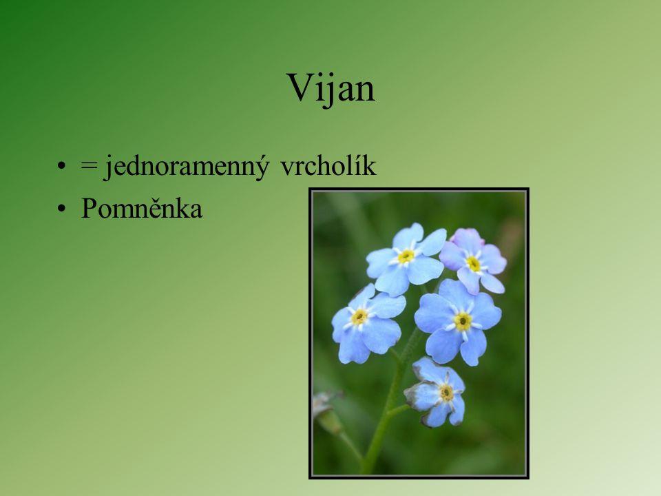 Vidlan = dvouramenný vrcholík Knotovka..