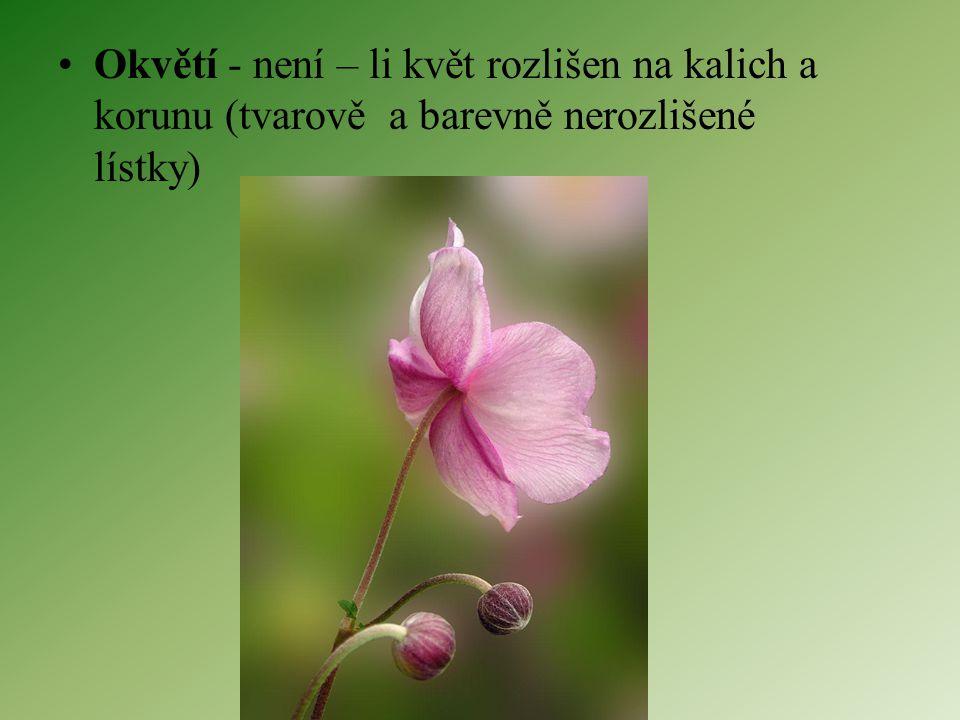 Okvětí - není – li květ rozlišen na kalich a korunu (tvarově a barevně nerozlišené lístky)