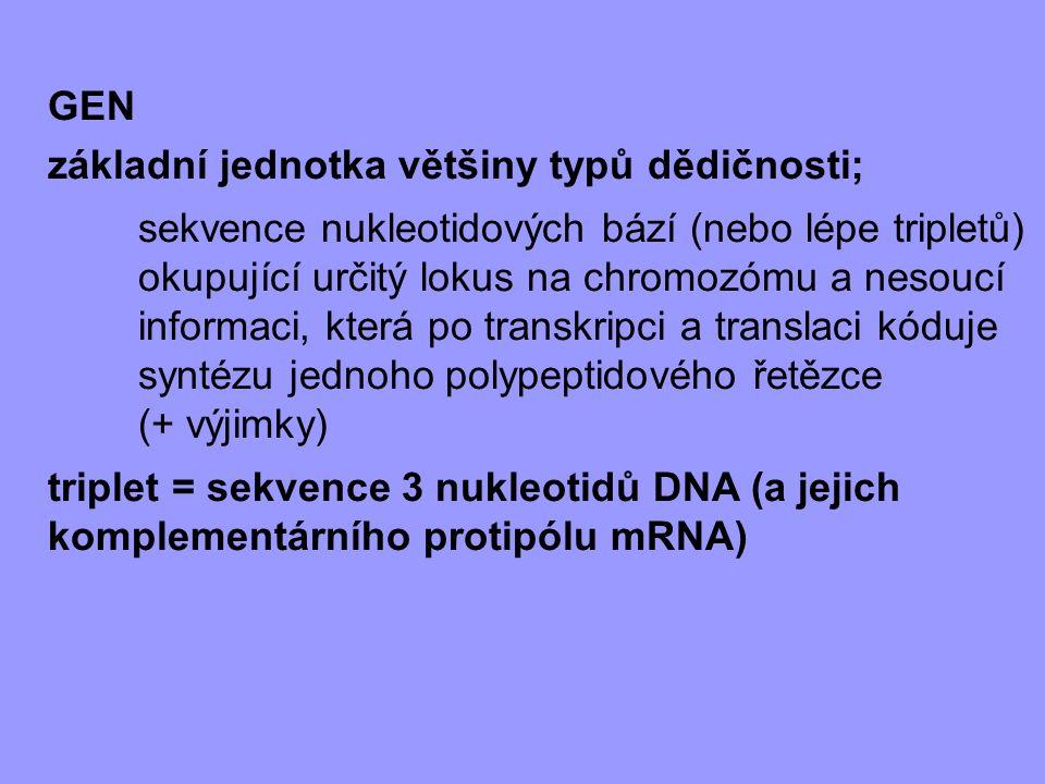 GEN základní jednotka většiny typů dědičnosti; sekvence nukleotidových bází (nebo lépe tripletů) okupující určitý lokus na chromozómu a nesoucí inform