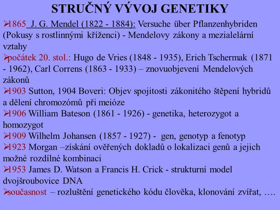 STRUČNÝ VÝVOJ GENETIKY  1865 J. G. Mendel (1822 - 1884): Versuche über Pflanzenhybriden (Pokusy s rostlinnými kříženci) - Mendelovy zákony a mezialel