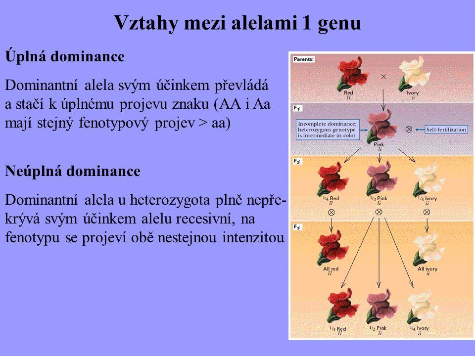 Vztahy mezi alelami 1 genu Úplná dominance Dominantní alela svým účinkem převládá a stačí k úplnému projevu znaku (AA i Aa mají stejný fenotypový proj