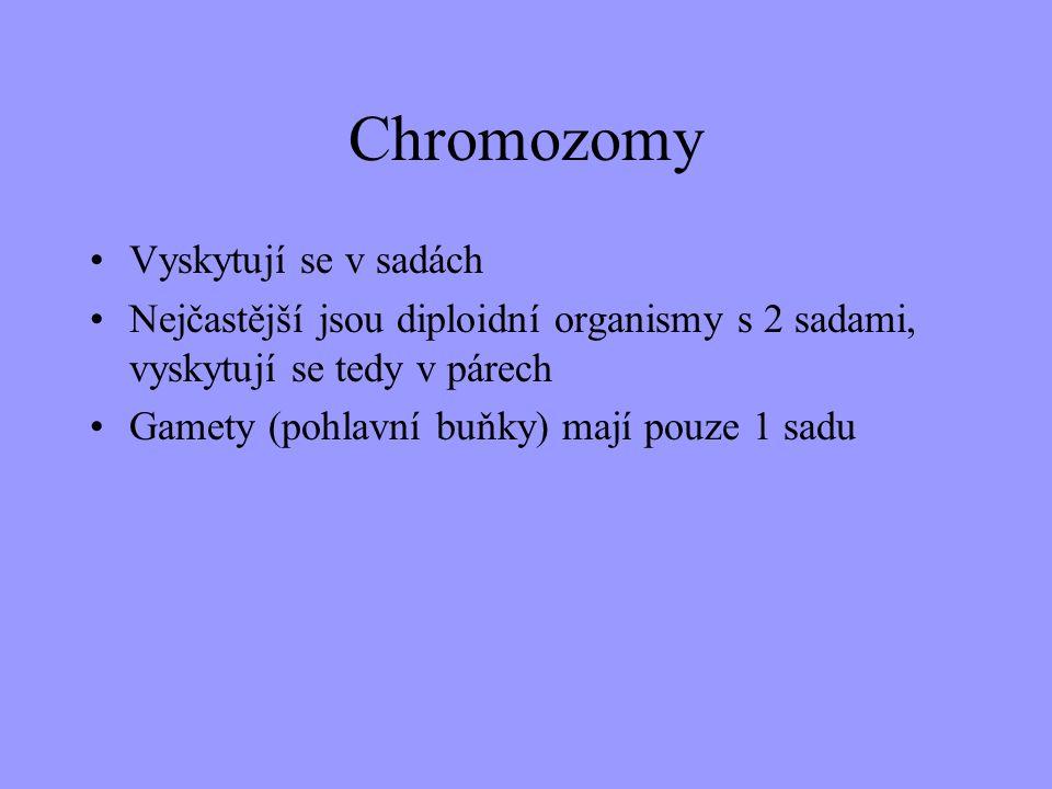 Dělení chromozomů metacentrický submetacentrický telocentrický subtelocentrický se satelitem