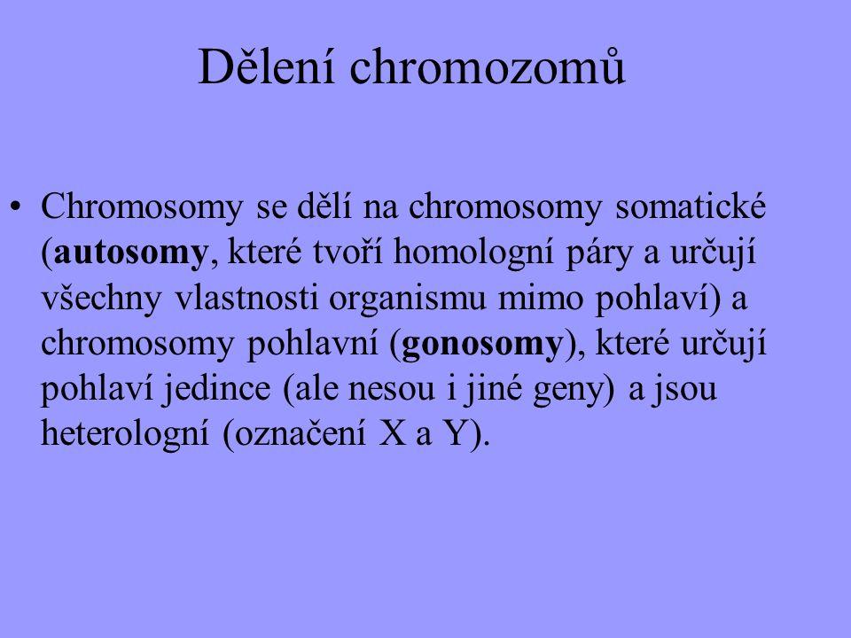 Dělení chromozomů Chromosomy se dělí na chromosomy somatické (autosomy, které tvoří homologní páry a určují všechny vlastnosti organismu mimo pohlaví)