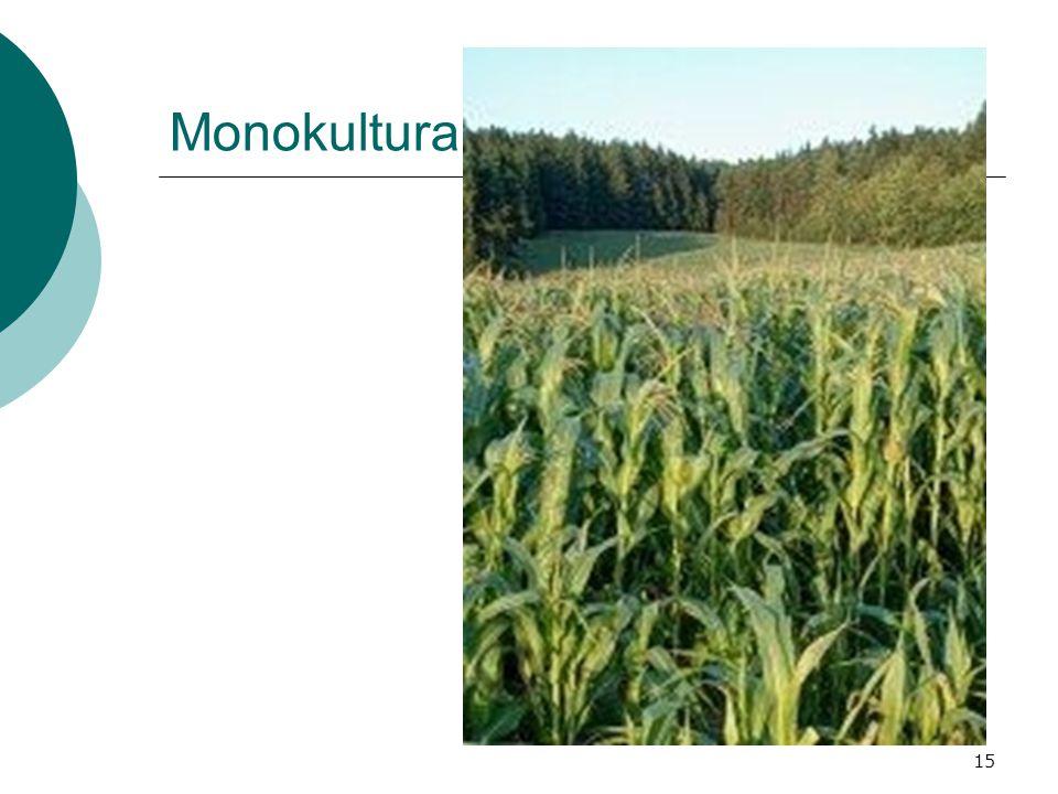 15 Monokultura
