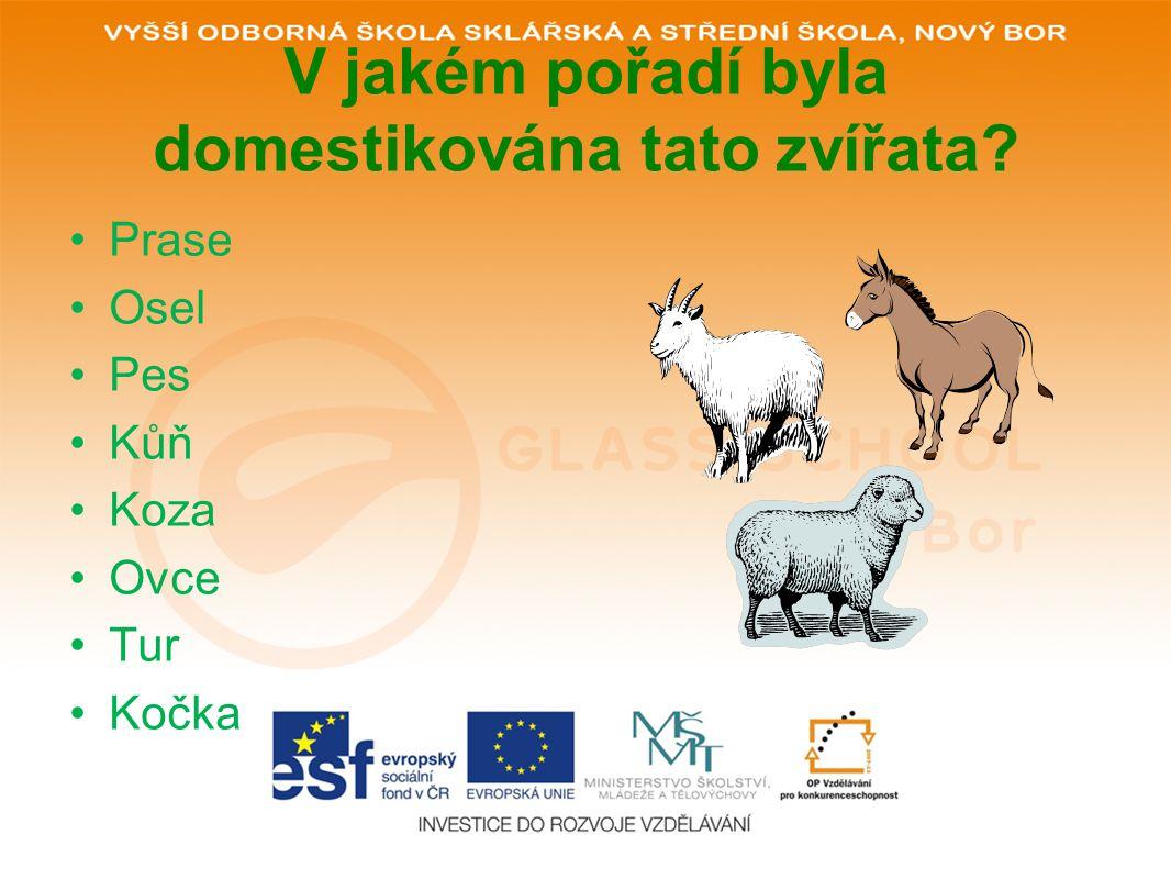V jakém pořadí byla domestikována tato zvířata? Prase Osel Pes Kůň Koza Ovce Tur Kočka