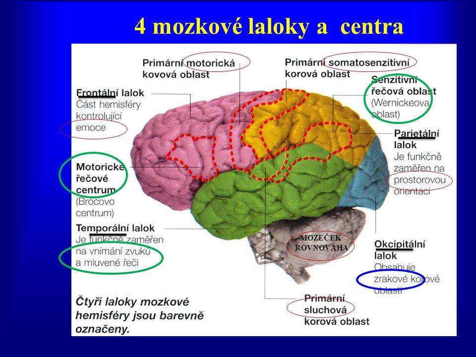 4 mozkové laloky a centra MOZEČEK ROVNOVÁHA