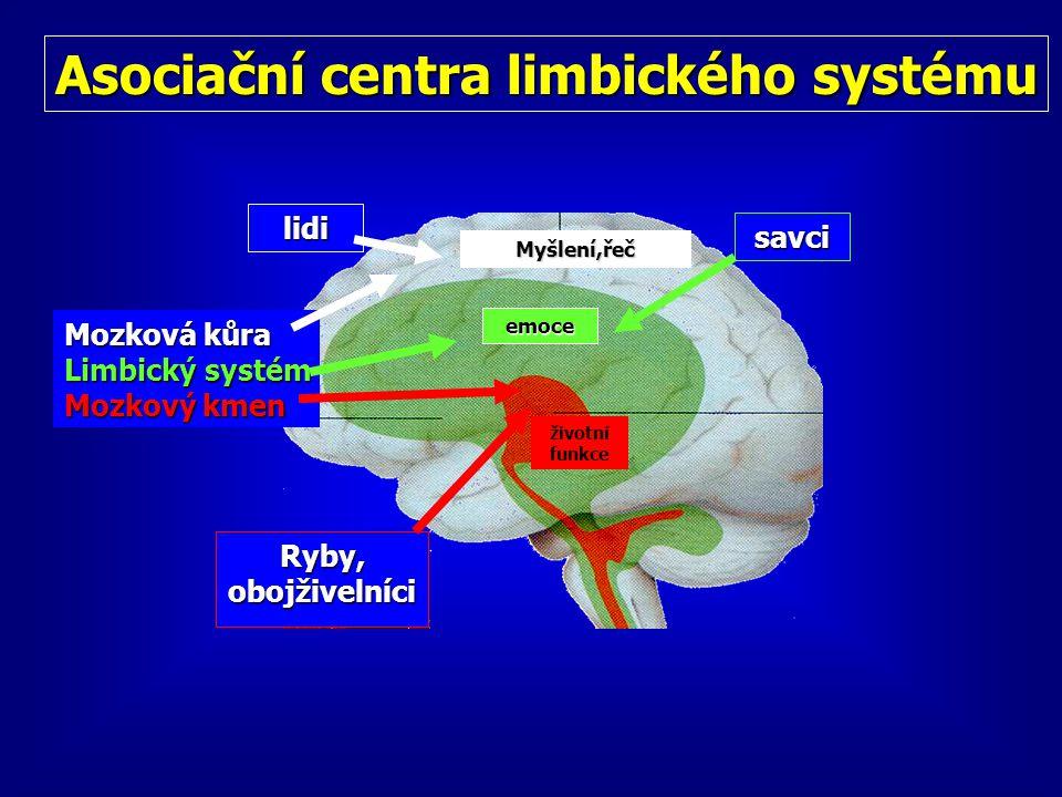 Asociační centra limbického systému Ryby, obojživelníci Mozková kůra Limbický systém Mozkový kmen savci lidi Myšlení,řeč emoce životní funkce