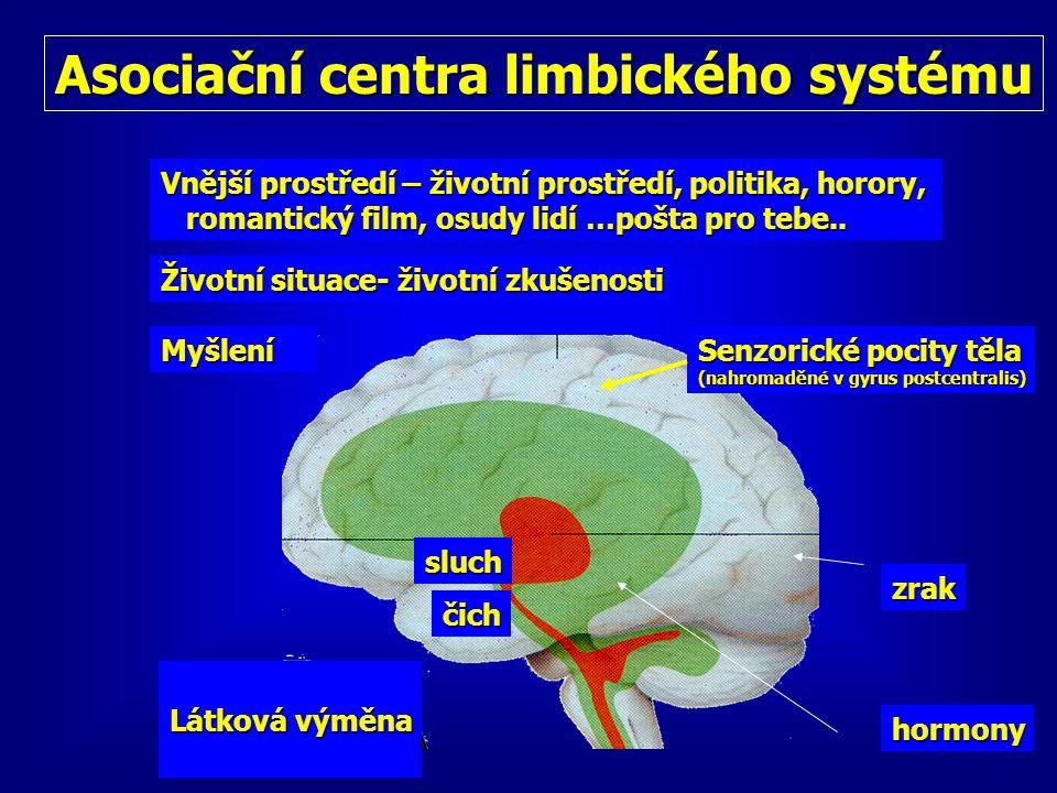 Asociační centra limbického systému Životní situace- životní zkušenosti čich Myšlení Senzorické pocity těla (nahromaděné v gyrus postcentralis) sluch