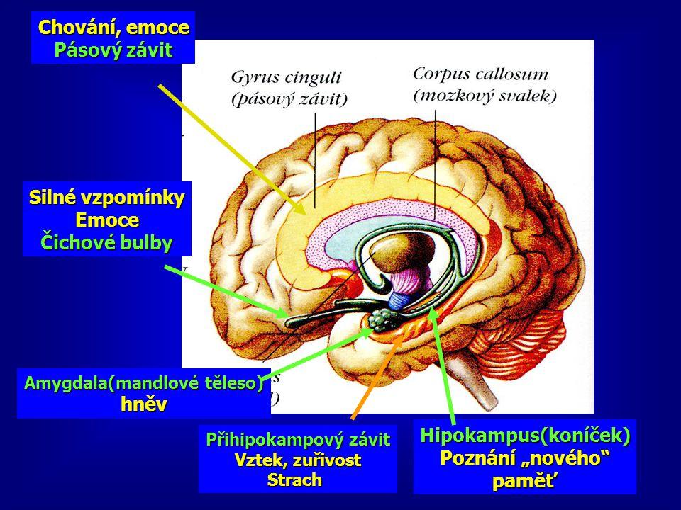 Chování, emoce Pásový závit Přihipokampový závit Vztek, zuřivost Strach Amygdala(mandlové těleso) hněv Silné vzpomínky Emoce Čichové bulby Hipokampus(