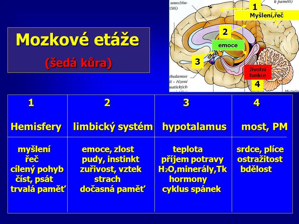 Mozkové etáže Mozkové etáže (šedá kůra) (šedá kůra) 1 2 3 4 1 2 3 4 Hemisfery limbický systém hypotalamus most, PM myšlení emoce, zlost teplota srdce,