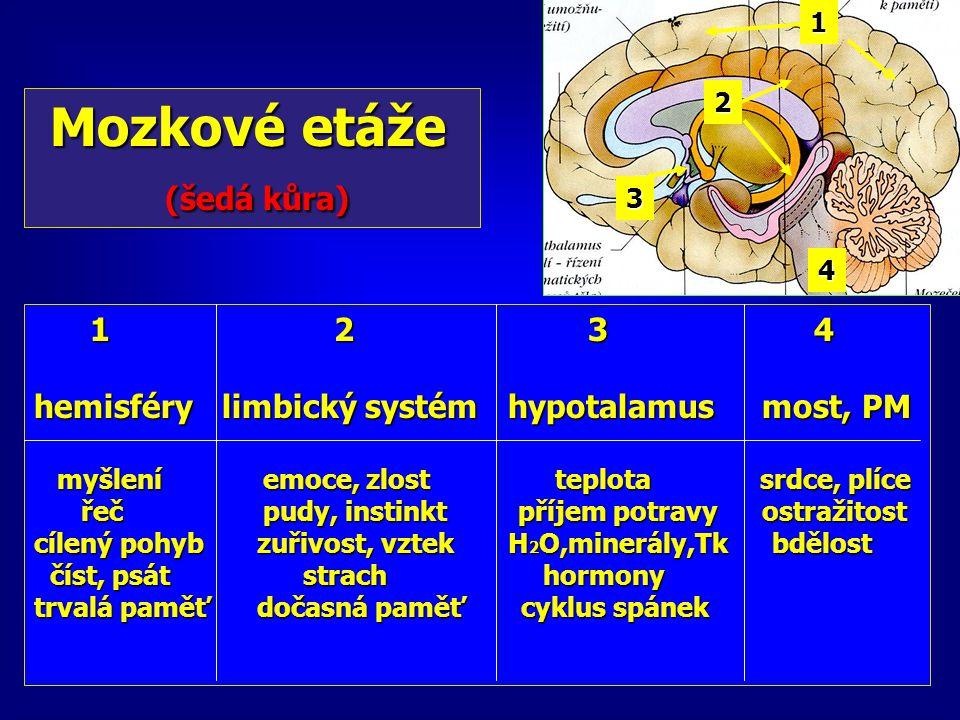 Mozkové etáže Mozkové etáže (šedá kůra) (šedá kůra) 1 2 3 4 1 2 3 4 hemisféry limbický systém hypotalamus most, PM myšlení emoce, zlost teplota srdce,