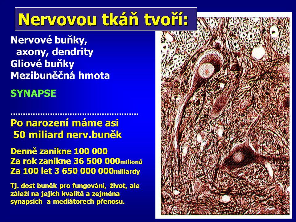 Nervovou tkáň tvoří: Nervové buňky, axony, dendrity Gliové buňky Mezibuněčná hmota SYNAPSE ……………………………………………. Po narození máme asi 50 miliard nerv.bun