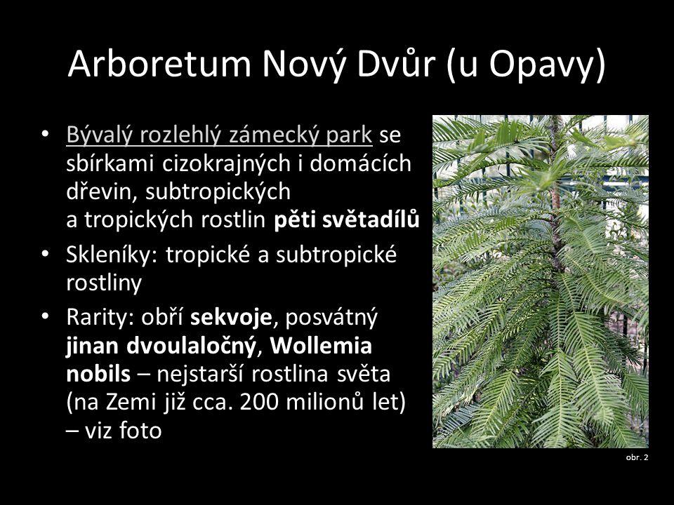Arboretum Nový Dvůr (u Opavy) Bývalý rozlehlý zámecký park se sbírkami cizokrajných i domácích dřevin, subtropických a tropických rostlin pěti světadí