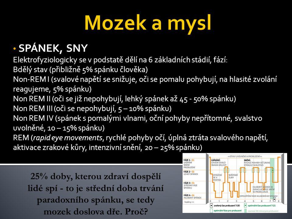 SPÁNEK, SNY Elektrofyziologicky se v podstatě dělí na 6 základních stádií, fází: Bdělý stav (přibližně 5% spánku člověka) Non-REM I (svalové napětí se snižuje, oči se pomalu pohybují, na hlasité zvolání reagujeme, 5% spánku) Non REM II (oči se již nepohybují, lehký spánek až 45 - 50% spánku) Non REM III (oči se nepohybují, 5 – 10% spánku) Non REM IV (spánek s pomalými vlnami, oční pohyby nepřítomné, svalstvo uvolněné, 10 – 15% spánku) REM (rapid eye movements, rychlé pohyby očí, úplná ztráta svalového napětí, aktivace zrakové kůry, intenzivní snění, 20 – 25% spánku) 25% doby, kterou zdraví dospělí lidé spí - to je střední doba trvání paradoxního spánku, se tedy mozek doslova dře.