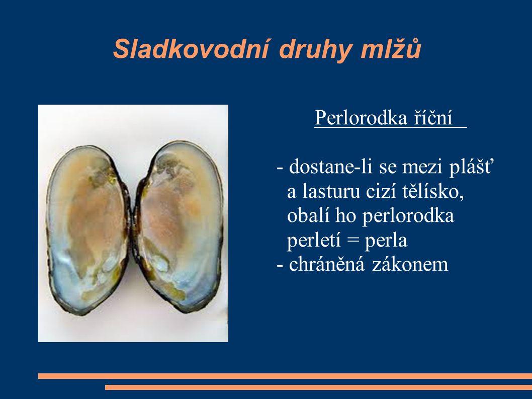 Sladkovodní druhy mlžů Perlorodka říční - dostane-li se mezi plášť a lasturu cizí tělísko, obalí ho perlorodka perletí = perla - chráněná zákonem
