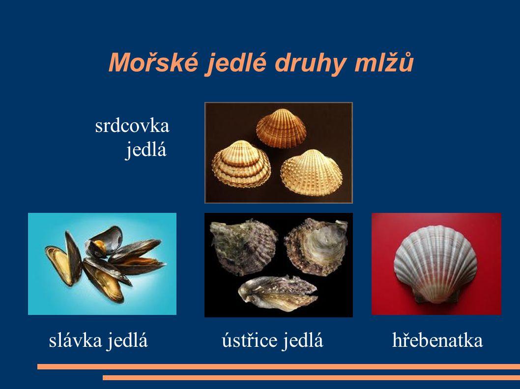 Mořské jedlé druhy mlžů srdcovka jedlá slávka jedlá ústřice jedlá hřebenatka