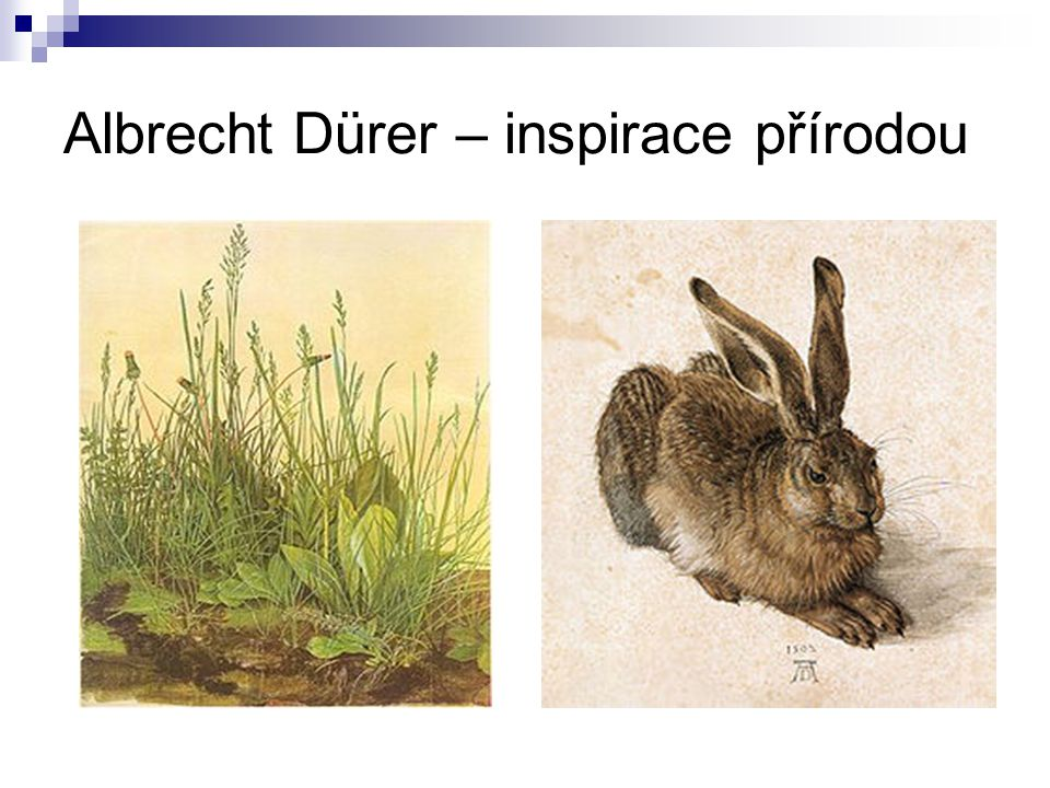 Albrecht Dürer – inspirace přírodou