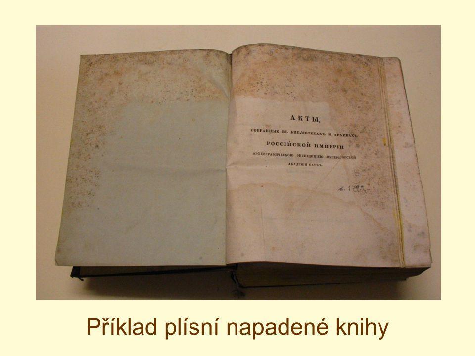 Detail knihy poškozené hmyzem