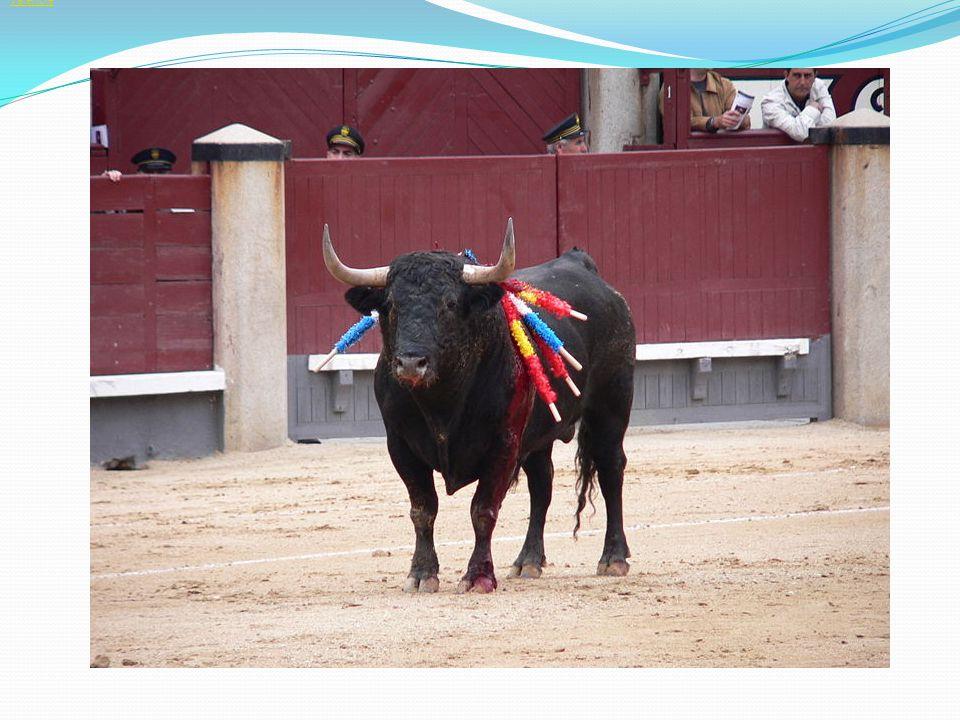 Španělé rádi slaví – během roku se slaví 10 státních a 5 regionálních svátků nejznámější jsou svátky, které se slaví ve Valencii – Las Falas – celou noc zde všichni baví, pijí a tančí, ulicemi města prochází pestrobarevný průvod a slavnost končí nádherným ohňostrojem La Tomatina – srpnová slavnost během níž po sobě účastníci hází rajčata V červenci se hlavním městem zábavy stává Pamplona – na slavný běh býků se sjíždí dobrovolníci z celého světa, aby se ocitli tváří v tvář rozzuřeným býkům běžícím ulicemi města Typickým znakem každého města je korida a býčí zápasy