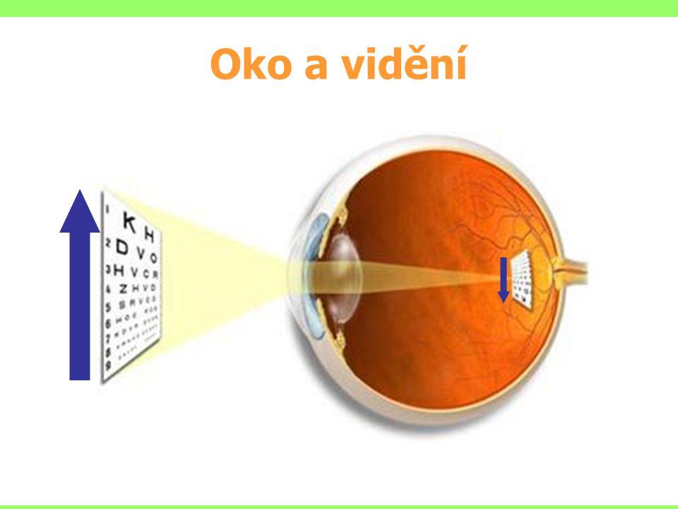 Tyčinky – asi 120 milionů buněk, které rozlišují pouze rozdíly jasů (čb) Čípky – asi 7 milionů buněk umožňujících barevné vidění (modrá, zelená a červená) Zdroj: Wikipedia Oko a vidění