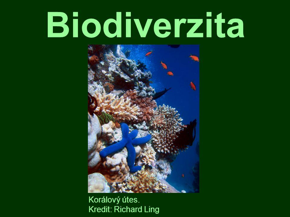 Definice biodiverzity obtížná definice, mediálně vyprázdněný pojem rozrůzněnost života, bohatství života na Zemi, atd.