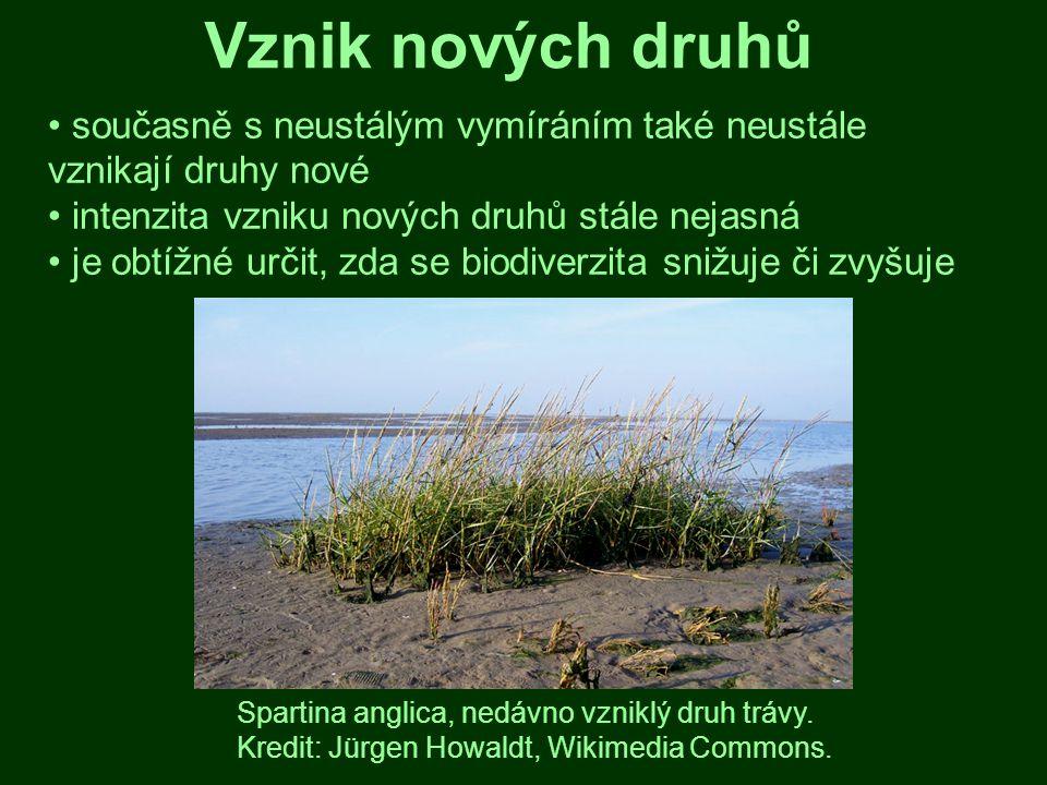 Ohrožení biodiverzity biodiverzita vnímána jako permanentně ohrožená lidskými aktivitami za nejvážnější se považuje vliv změn prostředí, invazních druhů a přehnaného využívání přírodních zdrojů Pestré společenstvo polních plevelů.