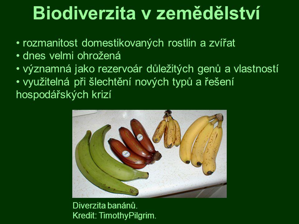 Biodiverzita a lidské zdraví rozmanitost přírody významná pro lidskou společnost velmi důležité estetické hledisko příznivý pestré přírody vliv na psychiku i kondici příroda i důležitým zdrojem nových léčiv a jiných surovin (bioprospektorství) Catharanthus roseus, farmaceuticky významná rostlina z Madagaskaru.