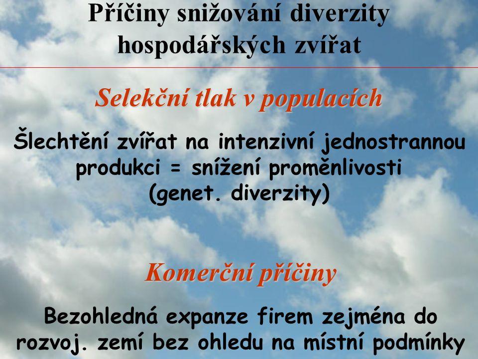 Příčiny snižování diverzity hospodářských zvířat Šlechtění zvířat na intenzivní jednostrannou produkci = snížení proměnlivosti (genet.