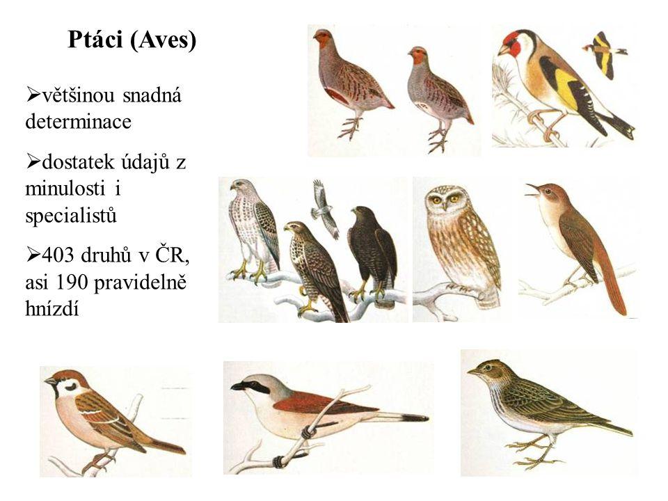 Ptáci (Aves)  většinou snadná determinace  dostatek údajů z minulosti i specialistů  403 druhů v ČR, asi 190 pravidelně hnízdí