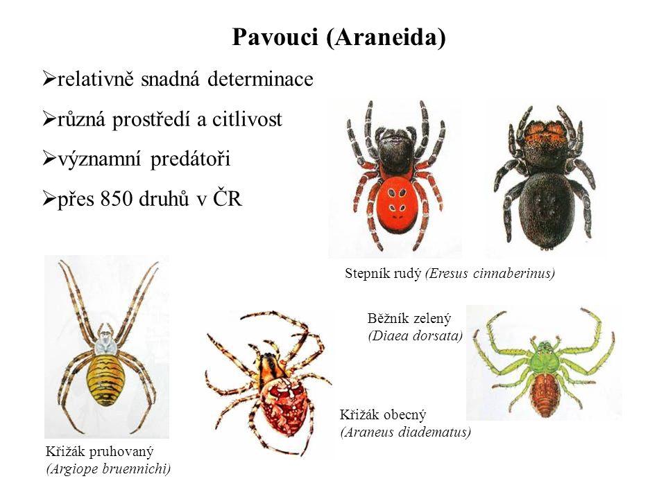 Pavouci (Araneida)  relativně snadná determinace  různá prostředí a citlivost  významní predátoři  přes 850 druhů v ČR Křižák pruhovaný (Argiope b