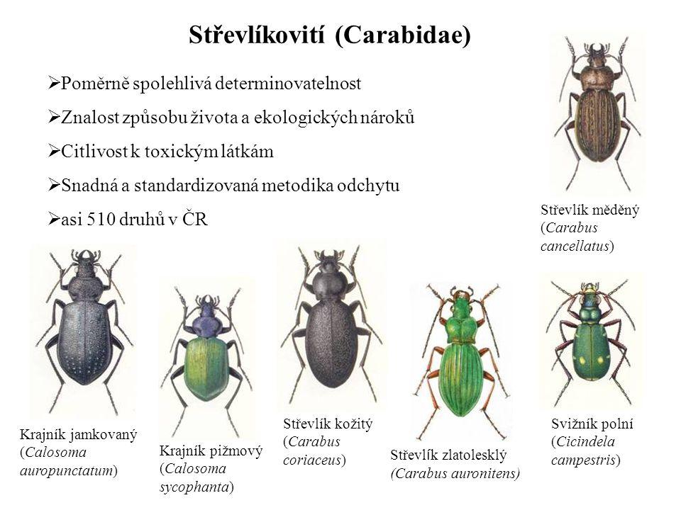 Střevl í k zlatolesklý (Carabus auronitens) Střevlíkovití (Carabidae) Krajník jamkovaný (Calosoma auropunctatum) Krajník pižmový (Calosoma sycophanta)