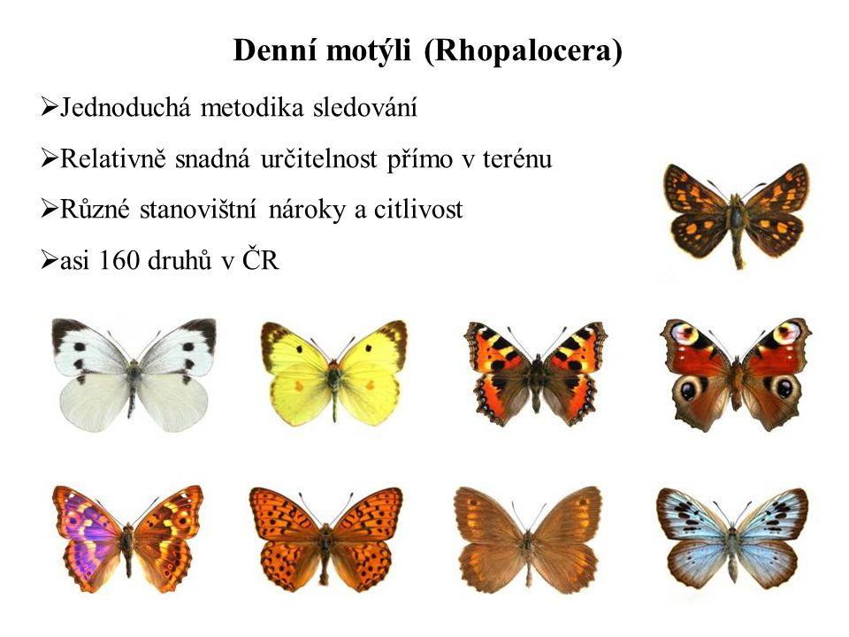 Denní motýli (Rhopalocera)  Jednoduchá metodika sledování  Relativně snadná určitelnost přímo v terénu  Různé stanovištní nároky a citlivost  asi